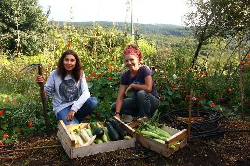 Les légumes de nos jardins