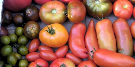 Gîte de La Bastide Nos tomates!