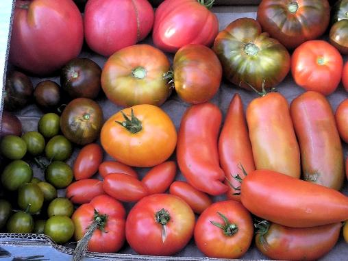 Nos tomates!