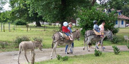 Taristourisme Balade avec les ânes