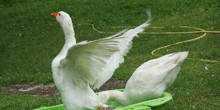 Taristourisme La ferme découverte les oies
