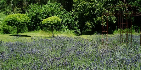 Studio Lubéron Our lavander field