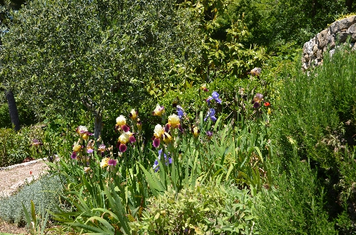 Allée des iris