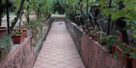 Ma Vie La Allée de vigne  menant au jardin