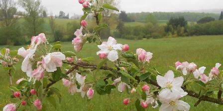Gite Tournonzen Gîte Prunier > Au printemps...