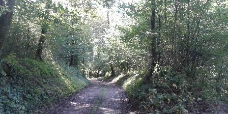 La Petite Abbaye Chemin en forêt