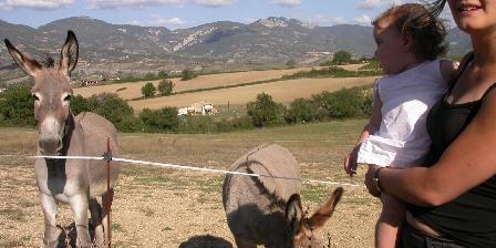 Domaine La Vanige Nos 3 ânesses profitent du Parc Naturel ;-)