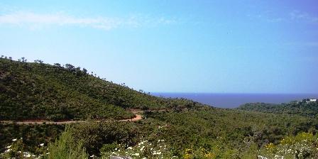 Le Mas de La Gavaresse La Fenière Le massif forestier