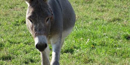 Gîte Le Refuge de La Chouette Cadichon, notre coquin d'âne