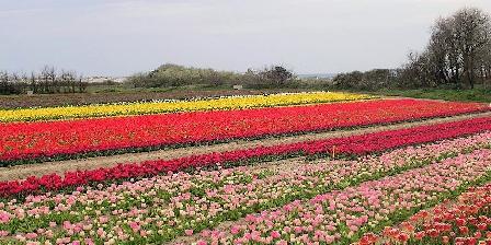 Gîte Ty Uhella Tulipes à la Torche