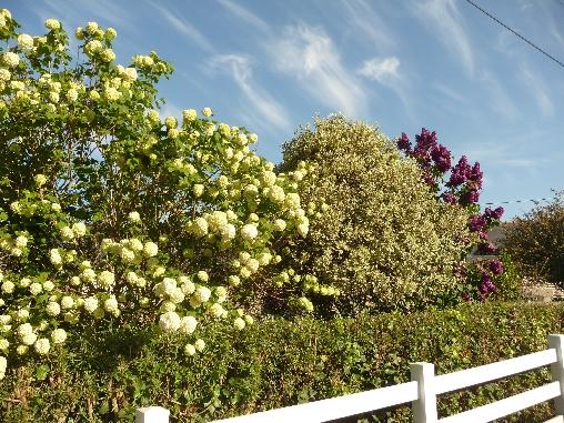 Clôture et jardin fleuri