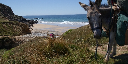 Les Chambres de Kerael Partez avec un âne pour decouvrir leschemins autour de nos chamb