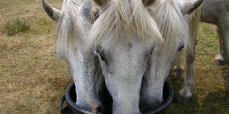 Les Chambres de Kerael Nos chevaux