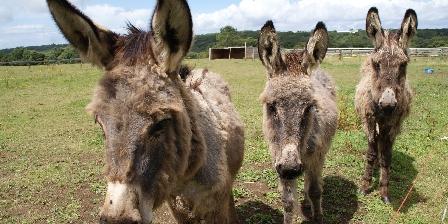 Les Chambres de Kerael Nos ânes !!!