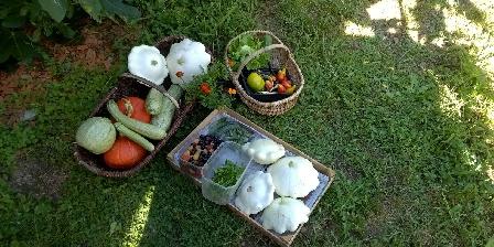 Les Arts ont la Cote Récolte du jardin