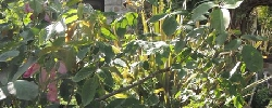 Gite Les Jardins