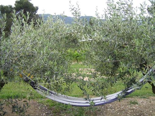 hamac dans les oliviers