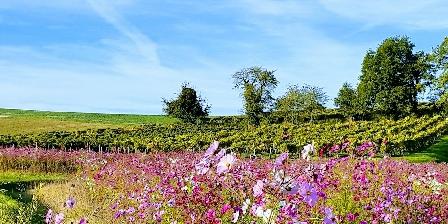 Les Roses de Jonzac Vignes