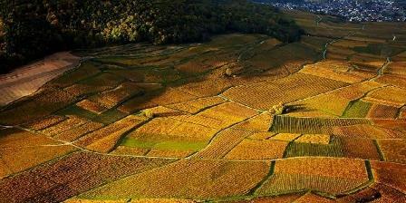 Gîte Les Hirondelles Le vignoble en automne