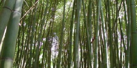 Le Mas des Sages 4/5 Bambouseraie