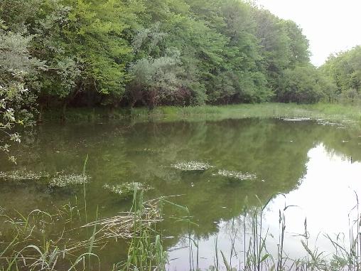 Le petit étang