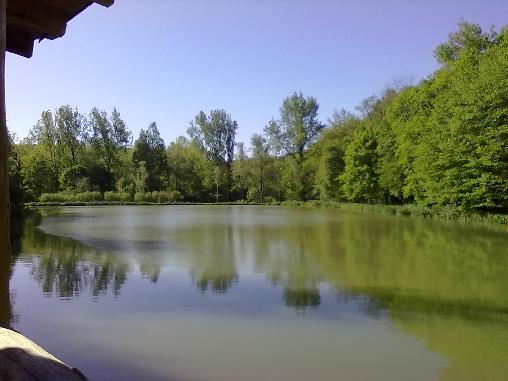 l'étang vu de la terrasse