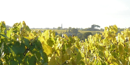 Domaine des 3 Versants Les vignes autour de notre domaine