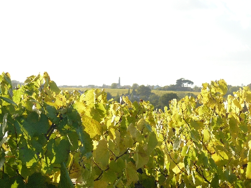bed & breakfast Loire-Atlantique - vineyards near wine-growing