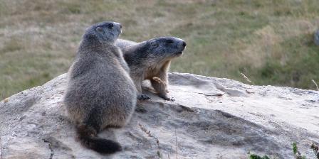 Chalet le Perce Neige Marmotte