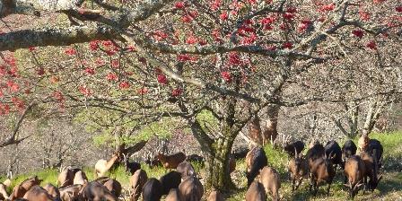GÎte de La Chèvrerie de Bambois