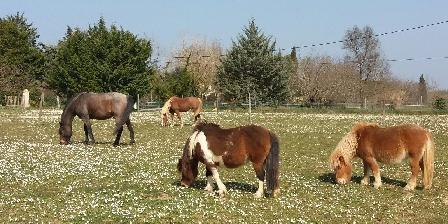 Les Fées du Gard Nos chevaux !