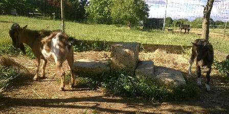 Les Fées du Gard Snoopy et Fala...