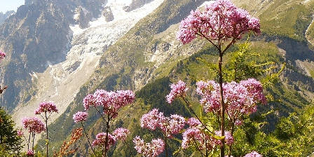 Gîte Serge Magnani Montagne: jardin fleuri