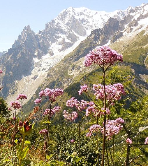 montagne: jardin fleuri