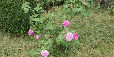 Location Saisonnière Les Roses de Blanchardière Louise Odier