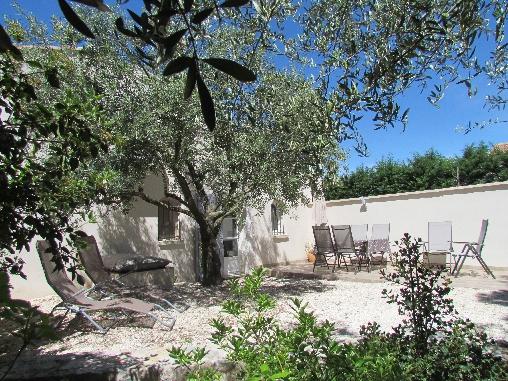 Repos sous l'olivier cigalon