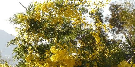 Villa avec Piscine 6 pers Golfe de St Tropez Mimosa du jardin