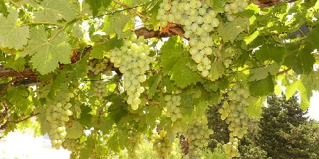 Villa avec Piscine 6 pers Golfe de St Tropez Le raisin de notre pergola