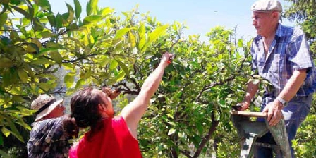 Locations-06 All my family cultivate our orange trees