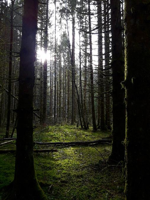 Forêt en Belledonne