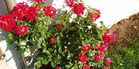 Chalet du Planot Le rosierdevantla fenêtre côté vallée