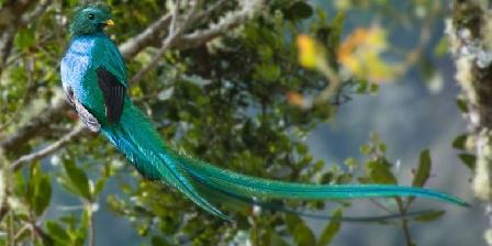 Maison Antony Quetzal Coat