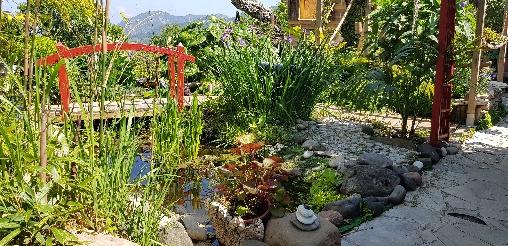 Jardin japonisant