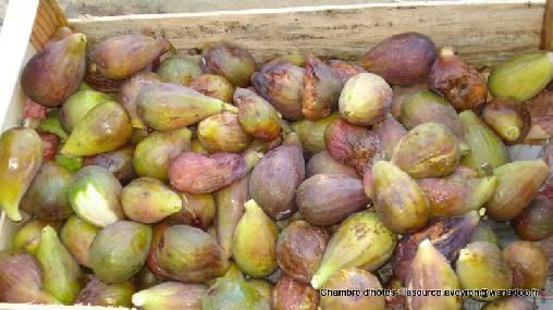 préparation confiture de figues lasourceaveyron
