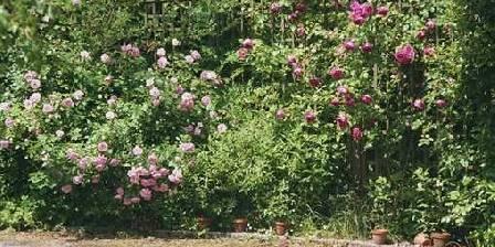 Une chambre d 39 hotes lille le jardin d 39 alix chambres d for Le jardin d alix lille