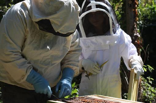 Jean Paul et Charlotte récoltent le miel pour le petit déjeuner