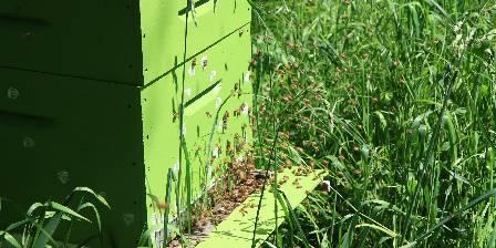 Le Jardin de Coramille Les abeilles au travail
