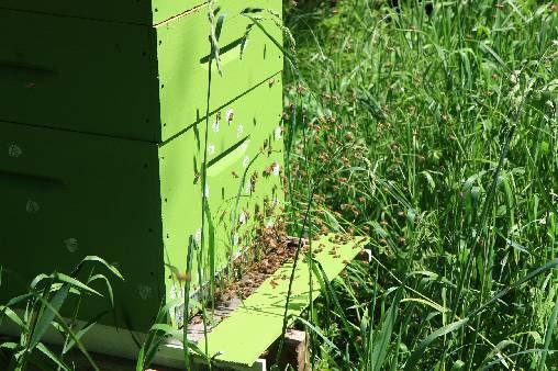 Les abeilles au travail