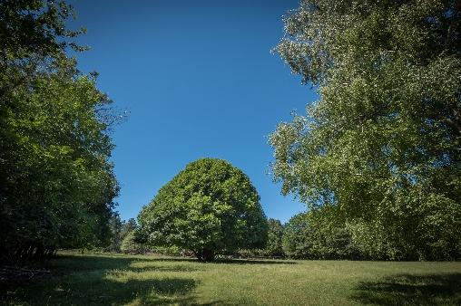 Parc arboré du Domaine de Malouziès