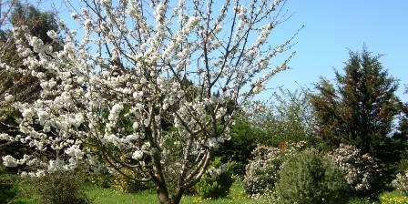 Mas de la Cigale Bleue Le printemps